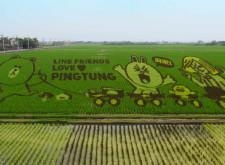 【LINE App】兒童節一起到屏東觀賞全球第一個LINE彩稻田吧!