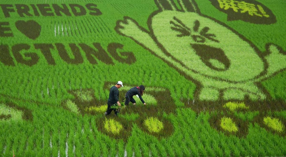 【圖三】設計師與縣府團隊進入彩稻田做調整期望呈現最佳視覺效果
